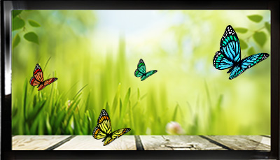 TV with Butterflies
